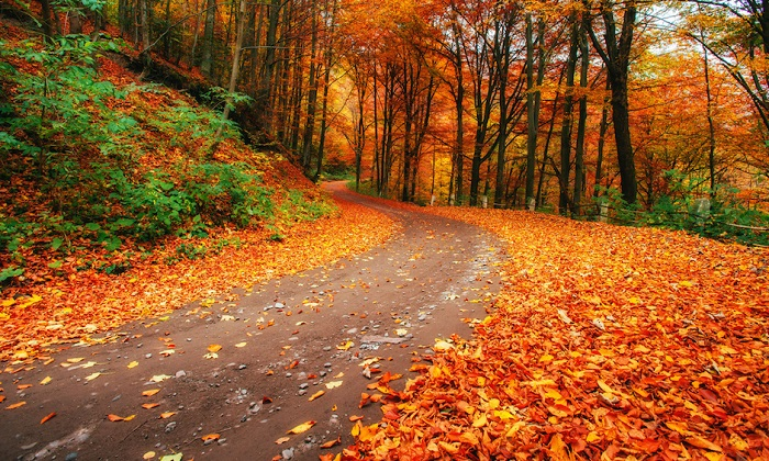 پاییز،فصل پاییز،انشا درمورد پاییز