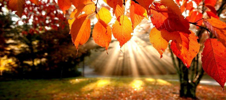 انشا پاییز از نگاه من