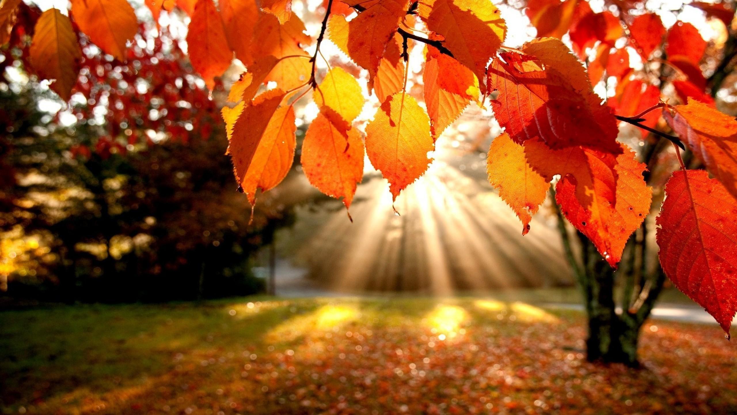 انشای توصیف پاییز