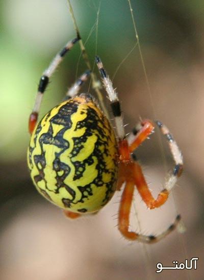 تحقیق در مورد عنکبوت