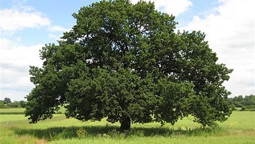 ثواب درختکاری