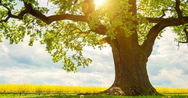 فواید درختکاری